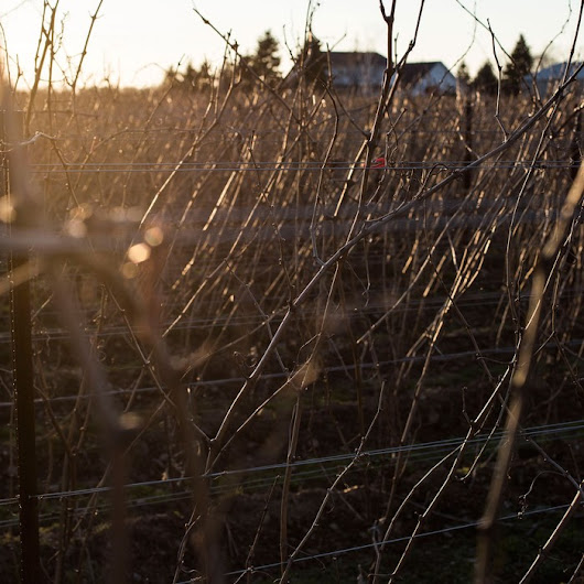 This Canadian Winemaker Thinks Canada Is Part of the Secret to Making Good Wine