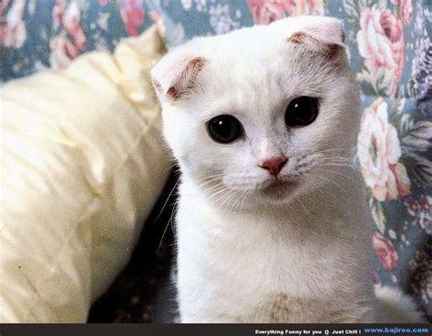 Unduh 650 Wallpaper Bergerak Kucing HD Terbaru