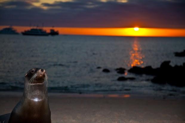 Galapagos Islands (4)