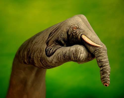 Elefante - Sigla televisiva per Animal Planet Discovery 2006 (Guido Daniele)