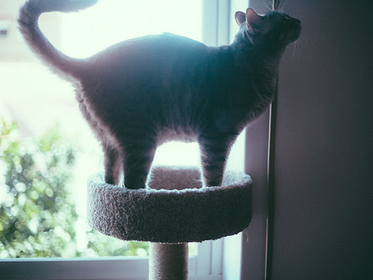 Enriching Indoor Cat Life on Tight Budget? Inexpensive Cat Trees (Big & Small)
