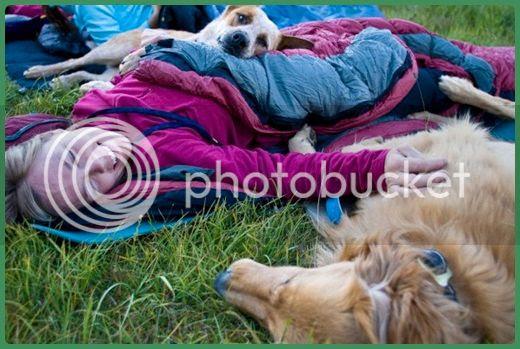 photo activities-dog-04_zps1a13709a.jpg