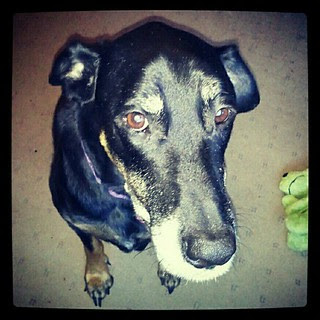 My baby girl is having her biopsy today... Good vibes & crossed paws are much appreciated!