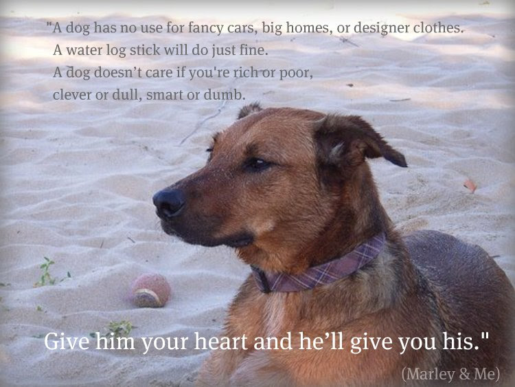 Dogs John Grogan Owen Wilson Marley Me Live By Quotes