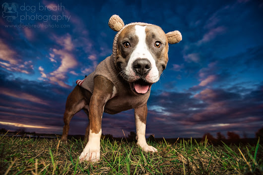 Meet One of the Best Dog Photographers on 500px… and in the World