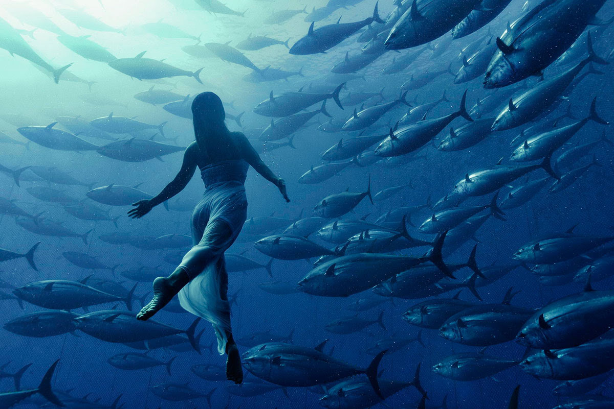 freediving-with-tuna-fish-by-kurt-arrigo