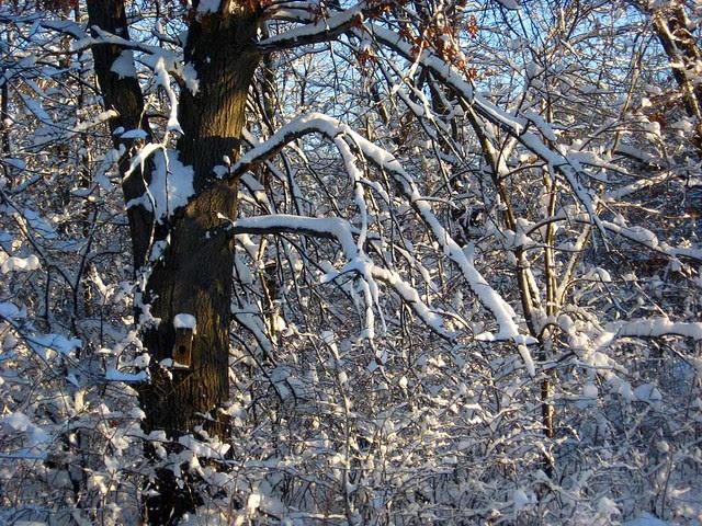 Minnesota_Snow_2012