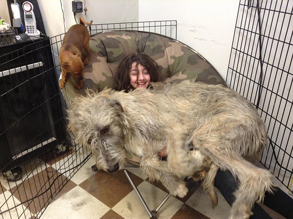 43. The Irish wolfhound puppy requires his seat size dog