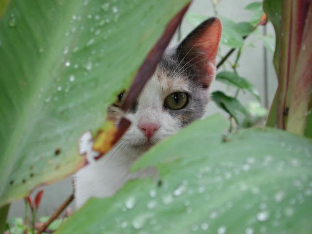 vida secreta gato