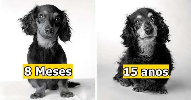 Sessão fotográfica revela como os cães envelhecem