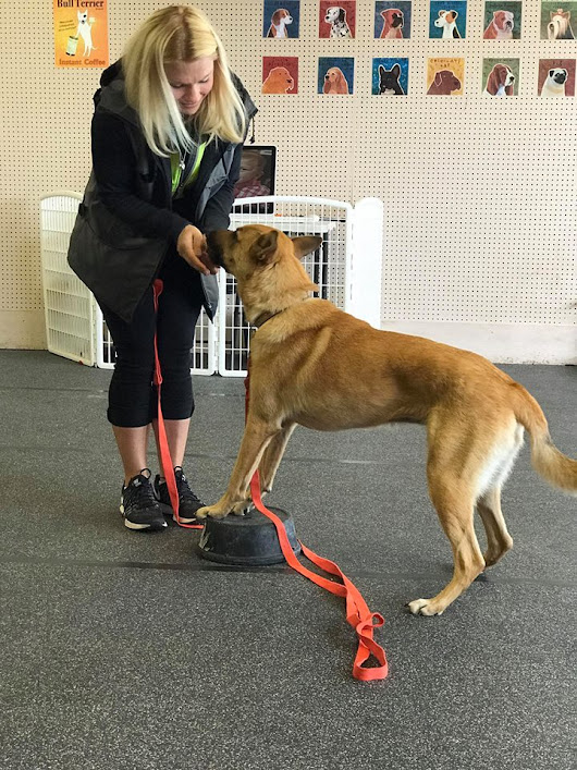 One on One Private Dog Obedience Training Weatherford Texas | K9 League