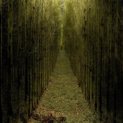 Double A trees por B℮n