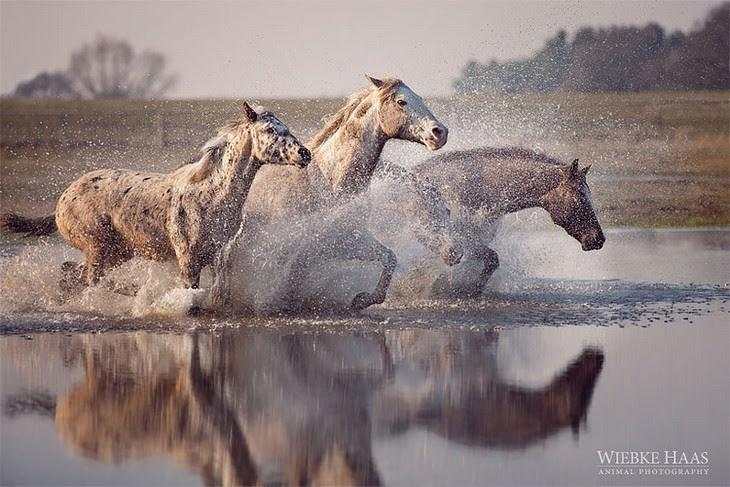 Fotografias de cavalos surpreendentes do fotógrafo Wiebke Haas