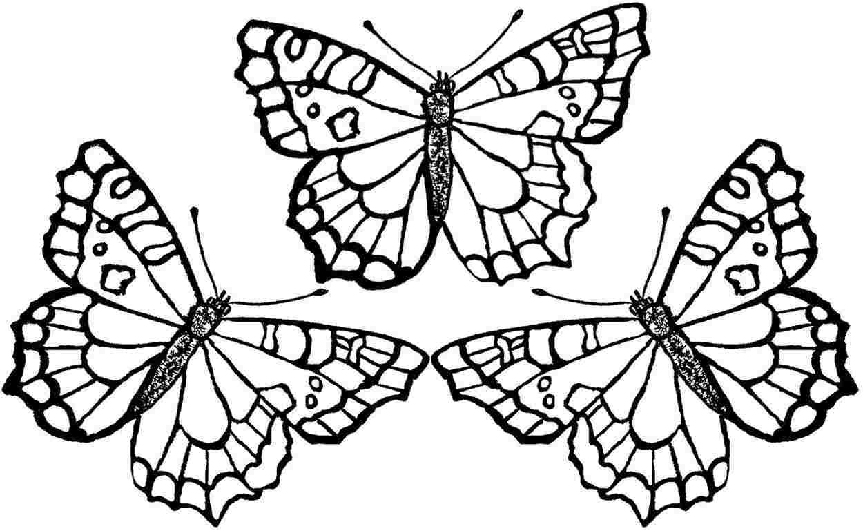 Butterfly Drawing To Print at GetDrawings | Free download