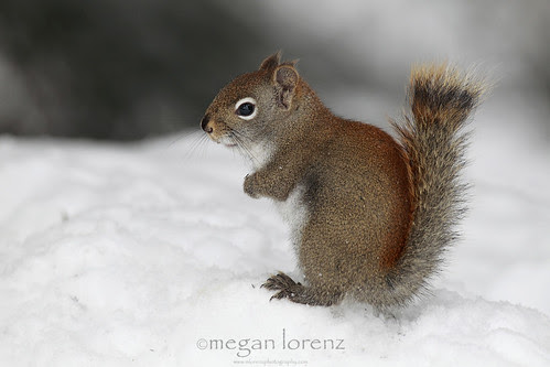 Where's my nuts? by Megan Lorenz
