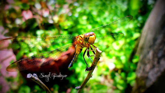 Mighty Dragon Fly