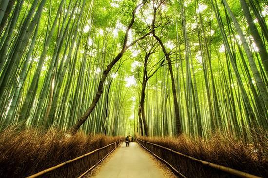 μοναδικά δάση (10)