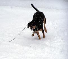 Tut_snowzip_122007