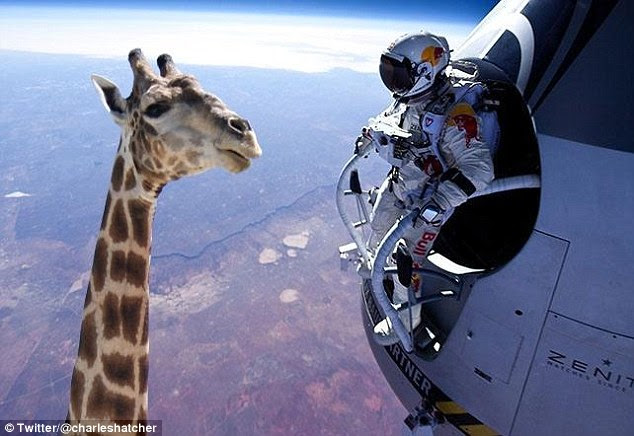 Sticking his neck out: In space, nobody expects to see a giraffe