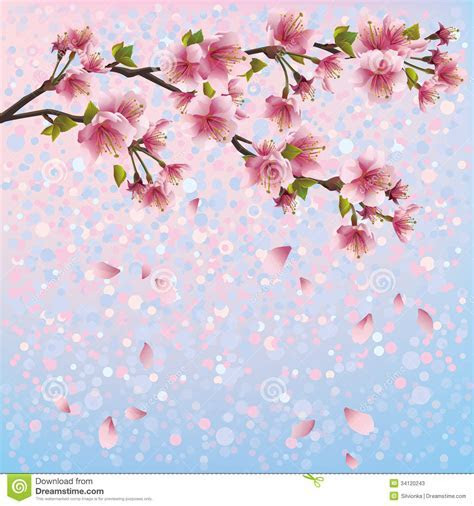 Colorful Spring Background With Sakura Blossom   J Stock