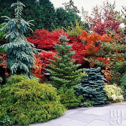 It's Fall: Here's What to Plant Now