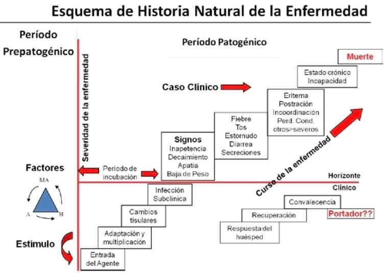 El Médico Práctico: Estadios de la enfermedad