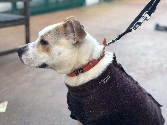 Tilly – 3 year old female Cross-Breed