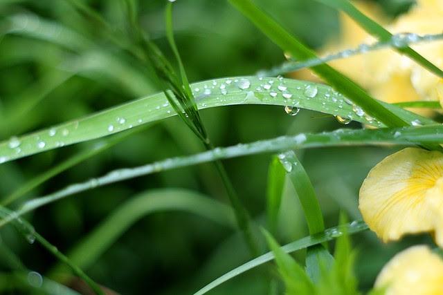 rain & irises, o'bryant square
