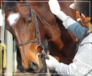 「富里ホースパーク」にて、体験乗馬。馬、可愛いなー。