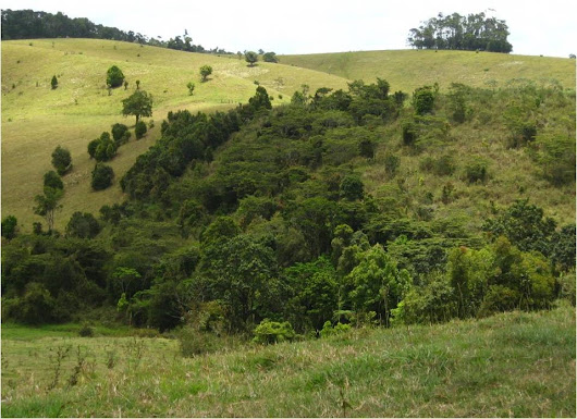 Biodiversity plantings speed up forest recovery in Australian rainforests - PARTNERS Reforestation Network
