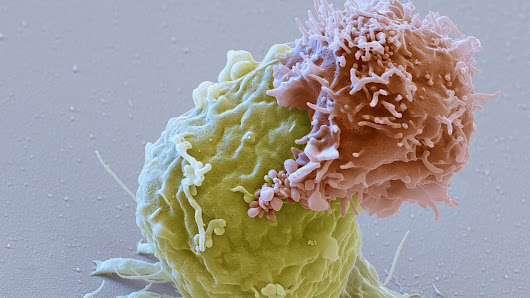 'Living Drug' That Fights Cancer By Harnessing Immune System Clears Key Hurdle