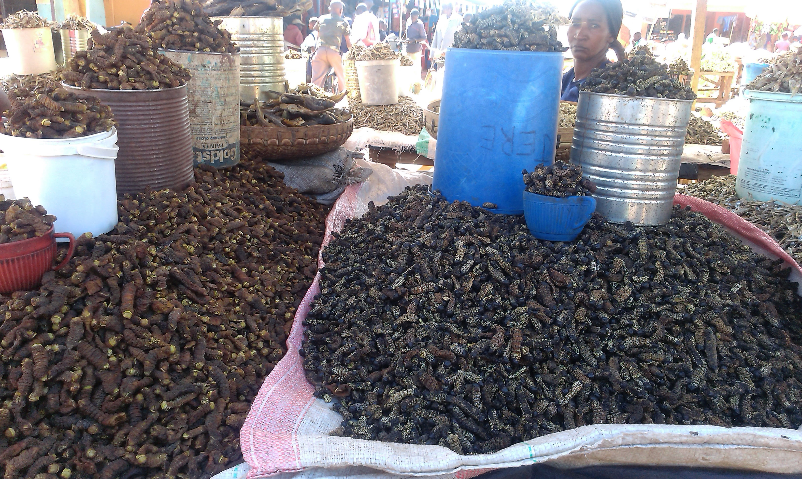 Mopani worms, A Zambian delicacy