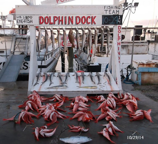 Dolphin Dock Charters : Recent Catches