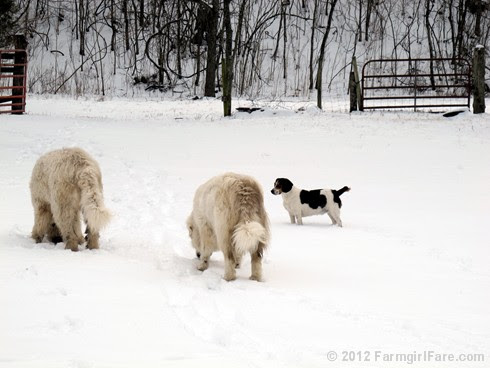 Snow dogs 12 - FarmgirlFare.com
