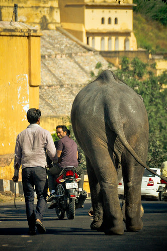 Jaipur-58