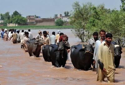 Paquistaneses fogem das cheias no Baluchistão. Foto de United Nations Development Programme