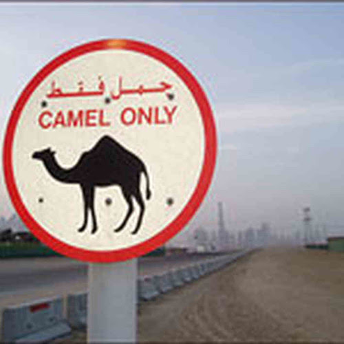 Camel Jockeys - ARABIA (Original Mix)