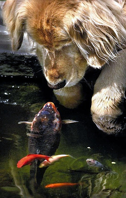 Friendship animals.  Dog acquainted with fish