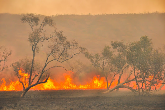 Fire Season is Coming! How to Save Money on Firebreaks