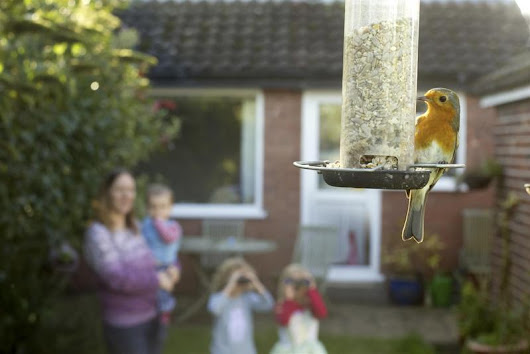 Wildlife Wednesday: RSPB Big Garden Birdwatch 2016 - Baby Routes