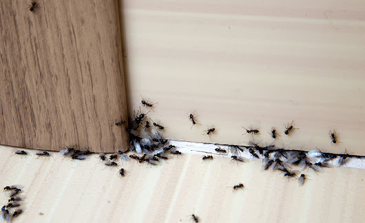 Types of Ants in Michigan | Pest Control Services - Bed Bug Exterminator and Pest Control Services | Hi-Tech Pest Control