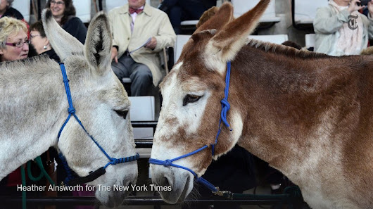 "NYT Science auf Twitter: ""Donkeys: Smart, fierce and loveable.  """