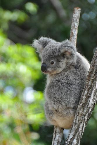 Australia (219 of 308)