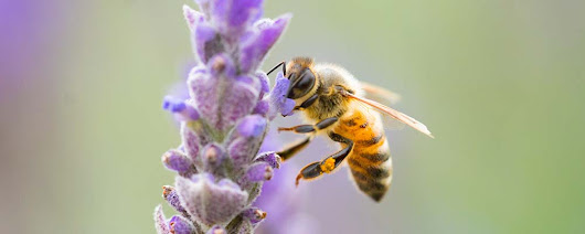 Urge your state to step up for bees! | Pesticide Action Network