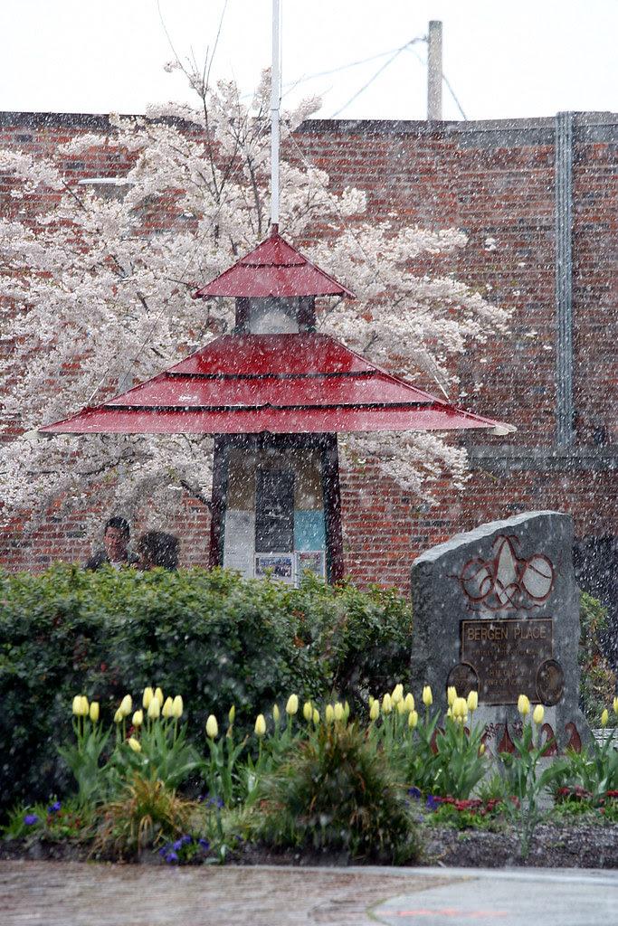 Snow & Spring Blossoms