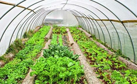 greenhouse_hoop