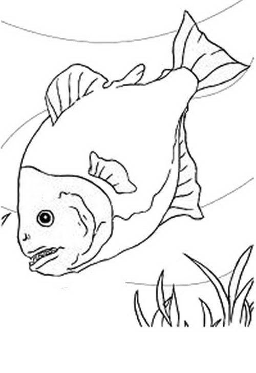 Pesci Da Colorare Disegni Gratis