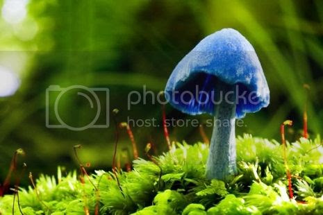 photo 32ExoticMushrooms_zps5bf4f817.jpg