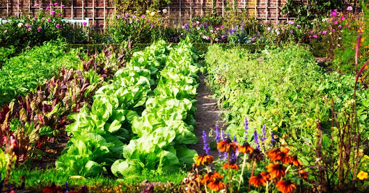 How to Grow Healthier Food at Home