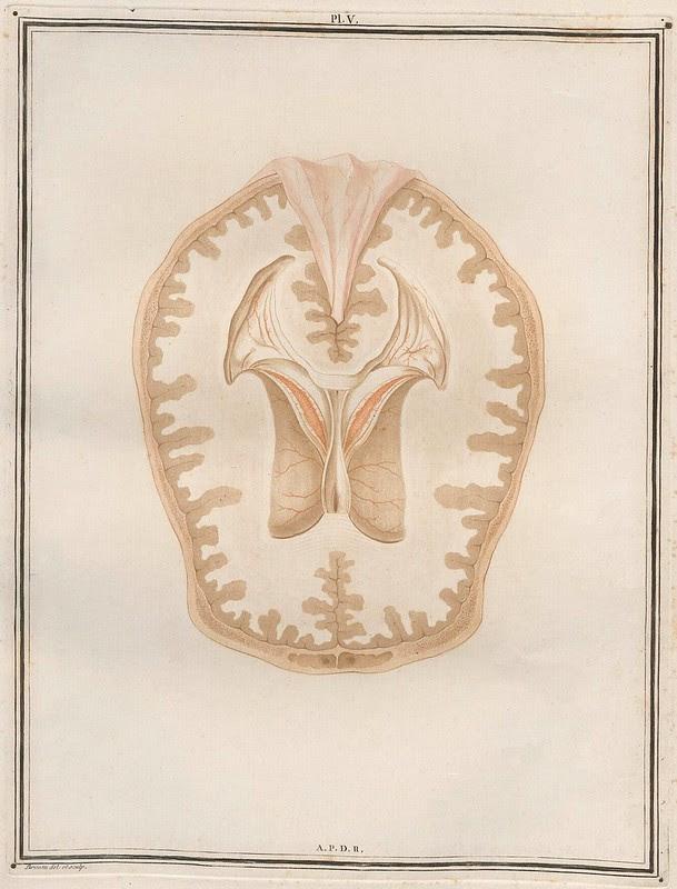 Traité d'Anatomie et de Physiologie (Vol. 2 neuroanatomy) by Félix Vicq D'Azyr 1786 e